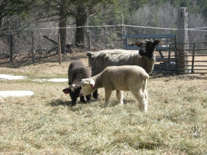 Esther and Ida with mom Peggy- these girls are BIG!