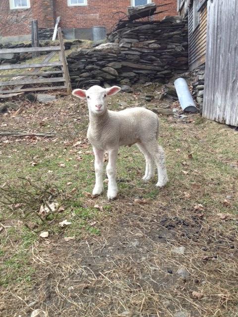 Sheep and PIckle Farm